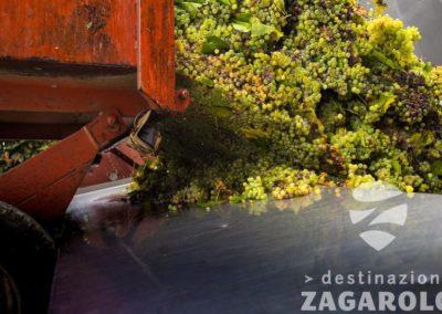 DESTINAZIONE ZAGAROLO - VENDEMMIA - TRATTORE UVA