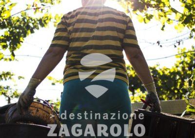 DESTINAZIONE ZAGAROLO - VENDEMMIA - VENDEMMIATRICE